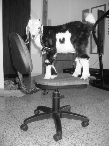 притча о козе