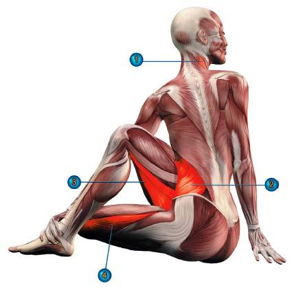 ардха матсиендрасана мышцы