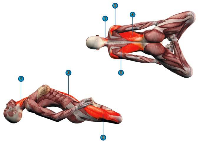 матсиасана мышцы