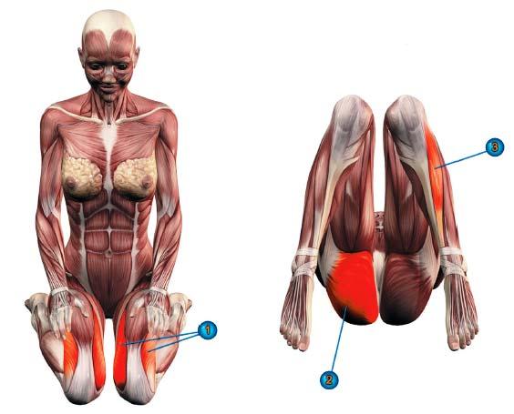 мышцы в вирасане
