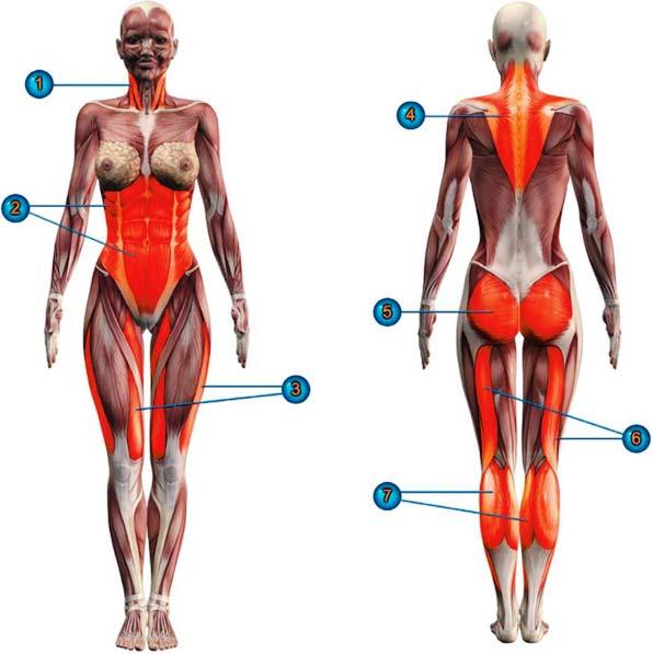 мышцы в тадасане