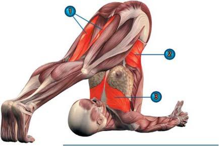 мышцы халасаны