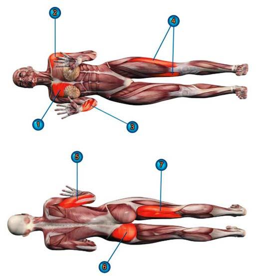 мышцы чатуранга дандасана