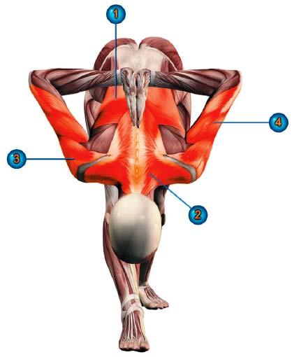 паршвоттанасана мышцы
