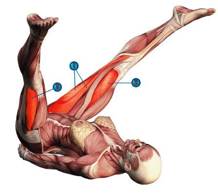 пурва халасана мышцы