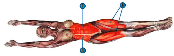 урдхва прасарита падасана мышцы