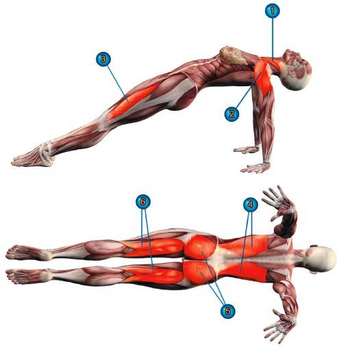 пурвоттанасана мышцы